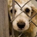 Abuzul animalelor