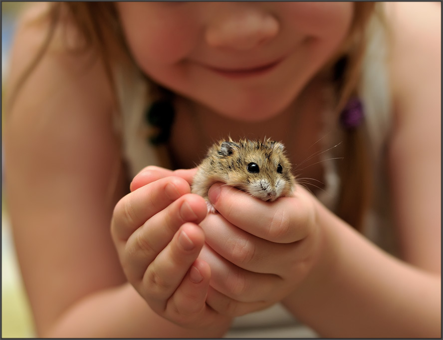 Animale pentru copii